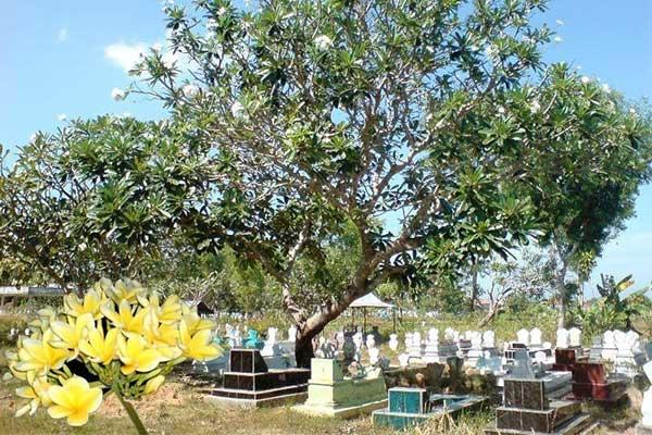 kuburan-dan-kamboja