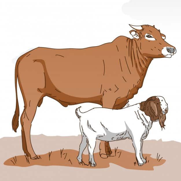 ilustrasi hewan qurban